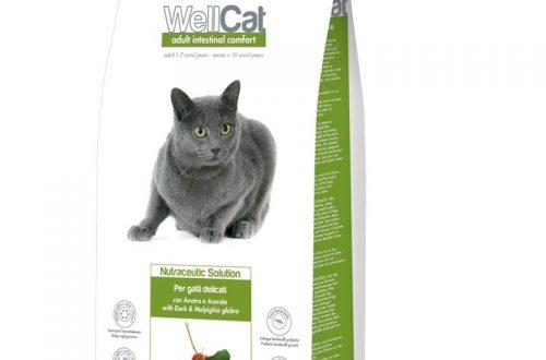 Kačių maistas