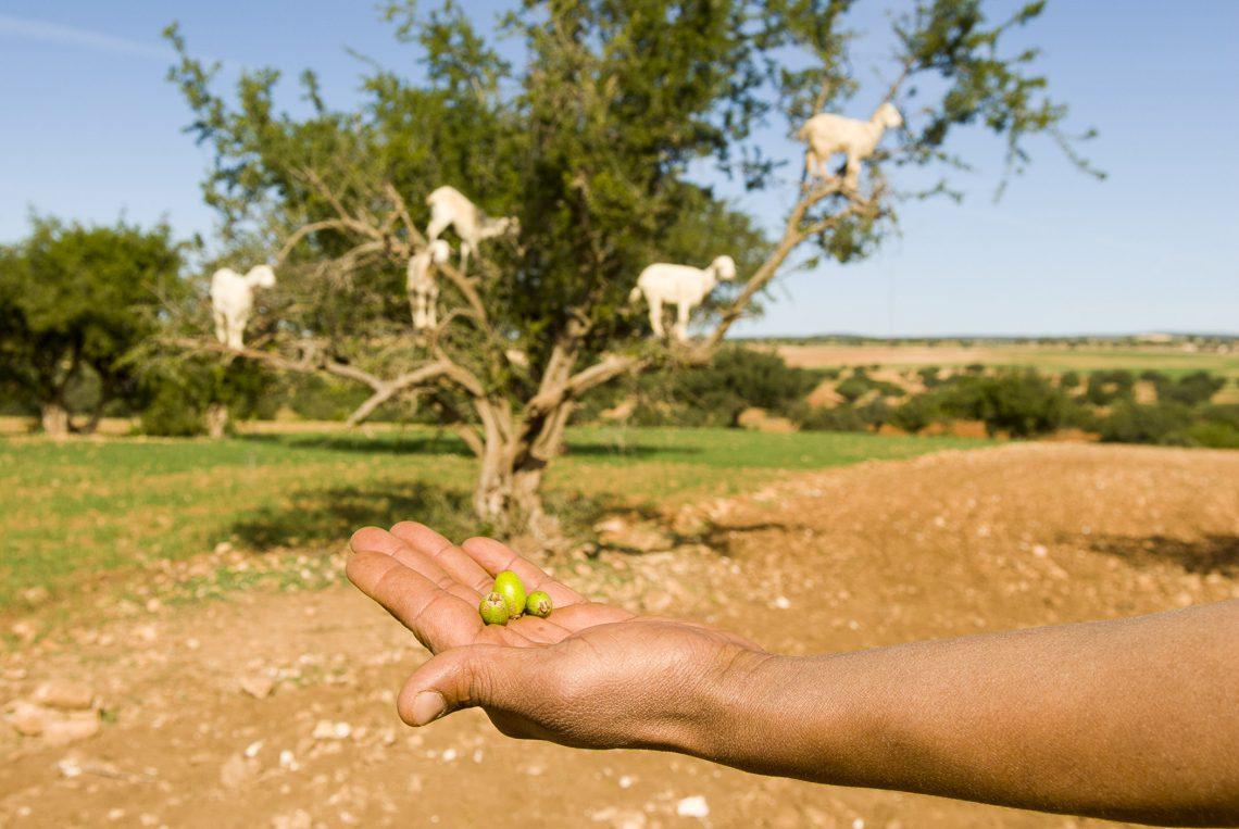 Natūralus argano aliejus