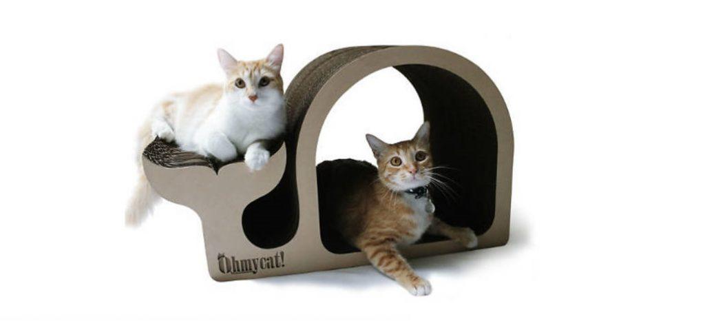 draskyklės katėms