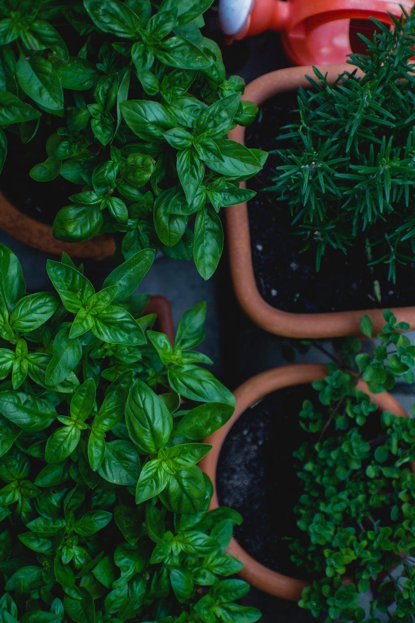 Daržas ant palangės: ką ir kaip galime auginti namuose?