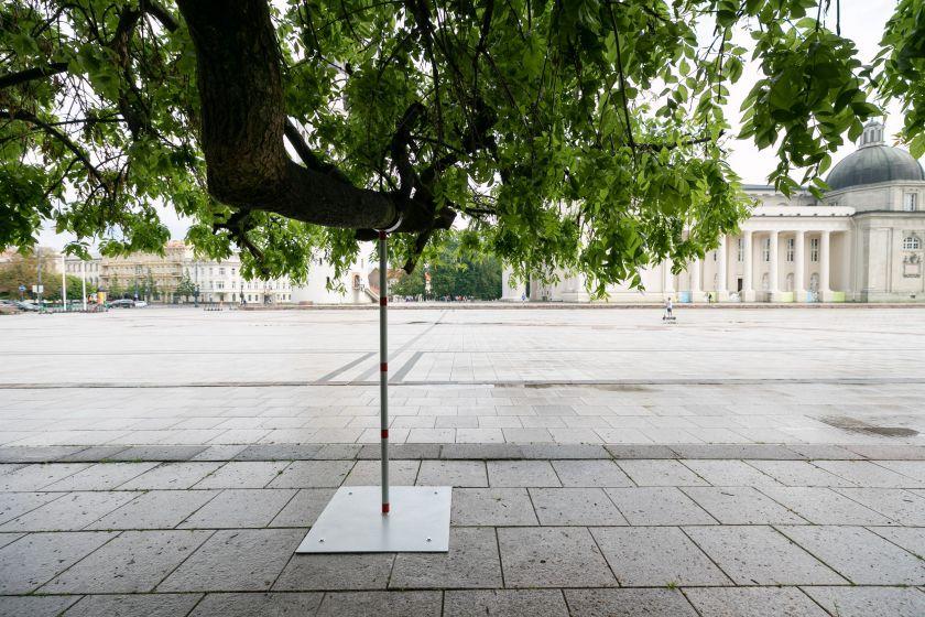 """Žalieji Vilniaus """"senjorai"""": sostinė rūpinasi brandžių miesto medžių išsaugojimu"""