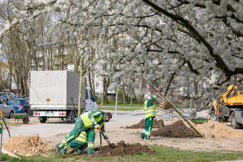 Pokyčiai Vilniaus savivaldybės struktūroje leis daugiau dėmesio skirti želdynams