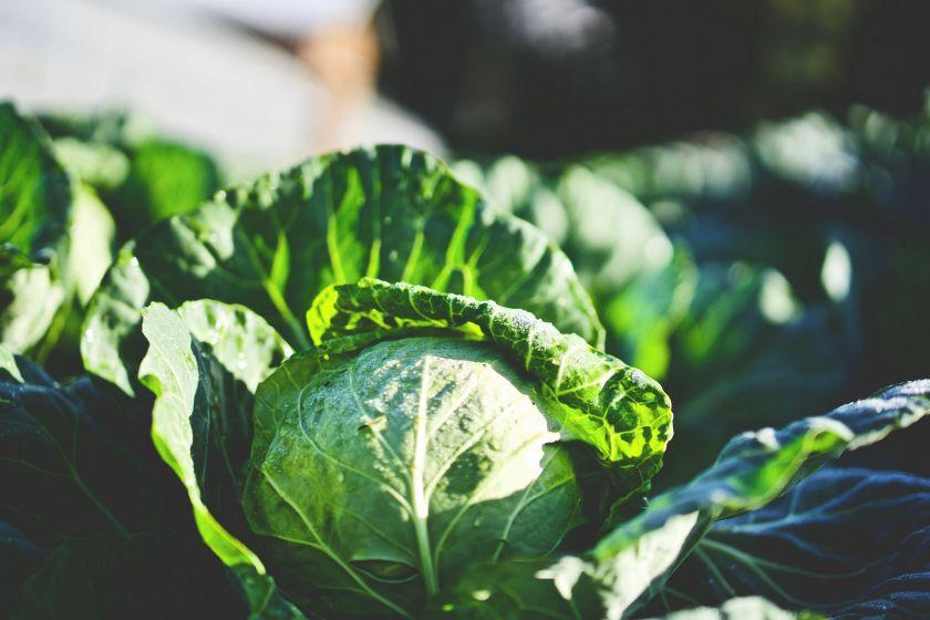 Gausus derlius Lietuvos ūkiuose šįmet žada mažesnes kainas