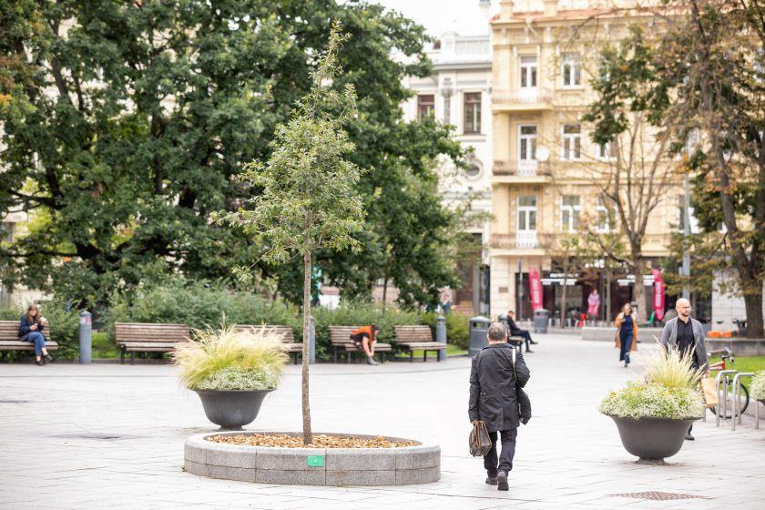 Žaliasis Vilnius: asmenines ir įmonių šventes miestiečiai įamžina sodinukais