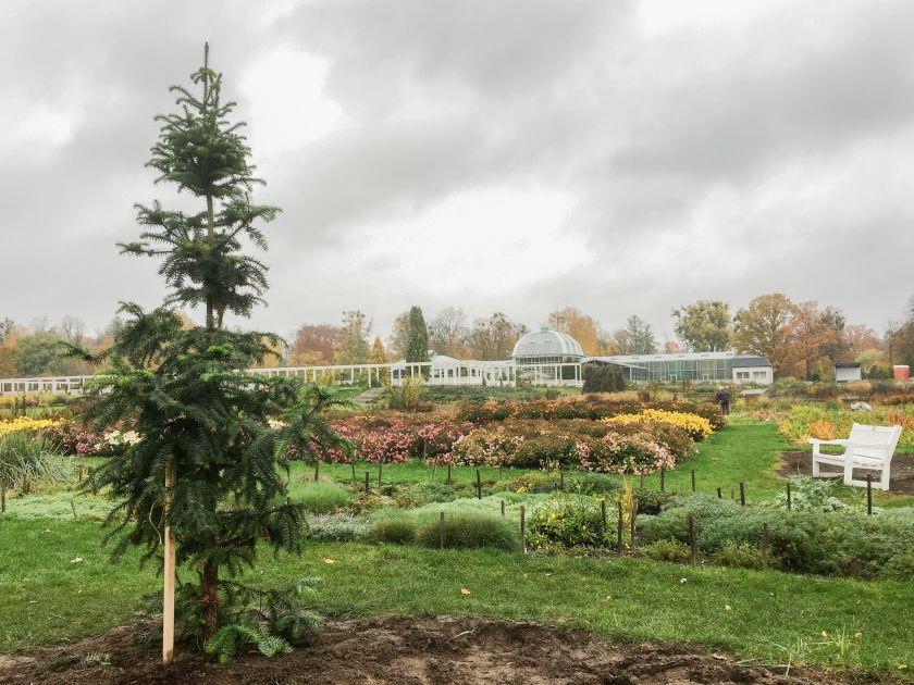 Dovana VDU Botanikos sodui – Lietuvoje retas spygliuotis