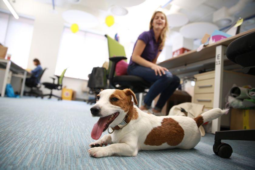 Kai reikės grįžti į biurus: augintinių šeimininkai darbdavius skatina permąstyti darbo kultūrą