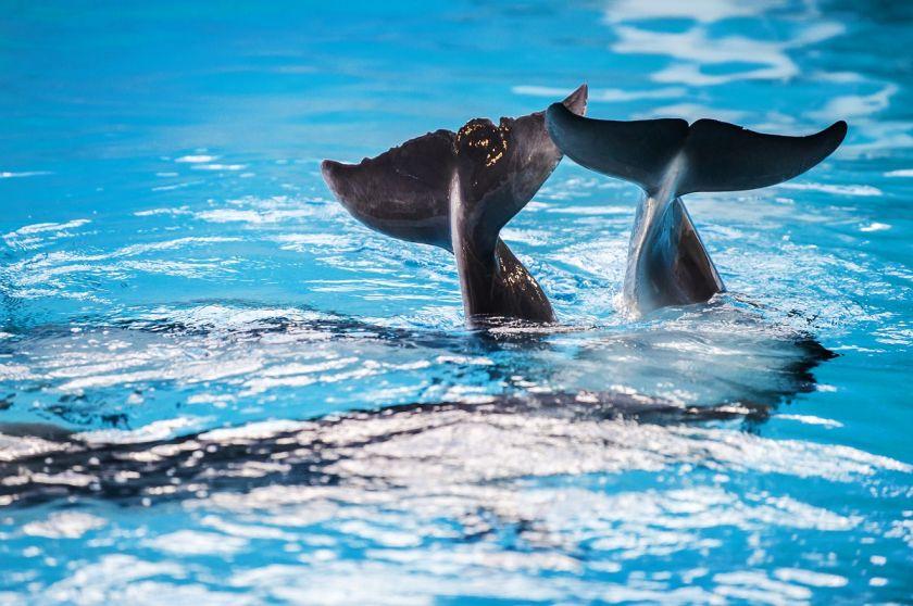 Ketvirtus metus tęsiama socialinė akcija: vaikai bus kviečiami į pasimatymą su delfinais
